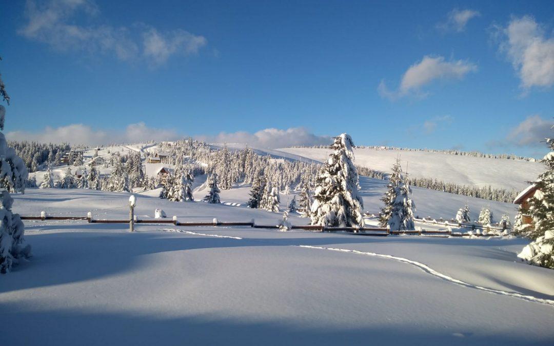 Iarna salbatica